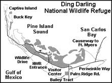 J.N. Ding Darling National Refuge